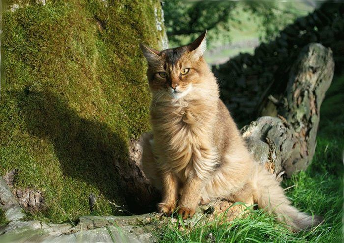 На кота дует ветер