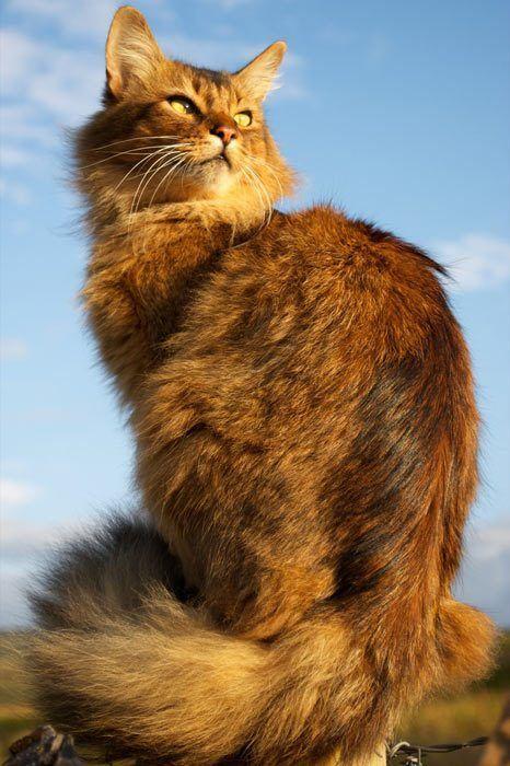 Красивый кот на улице