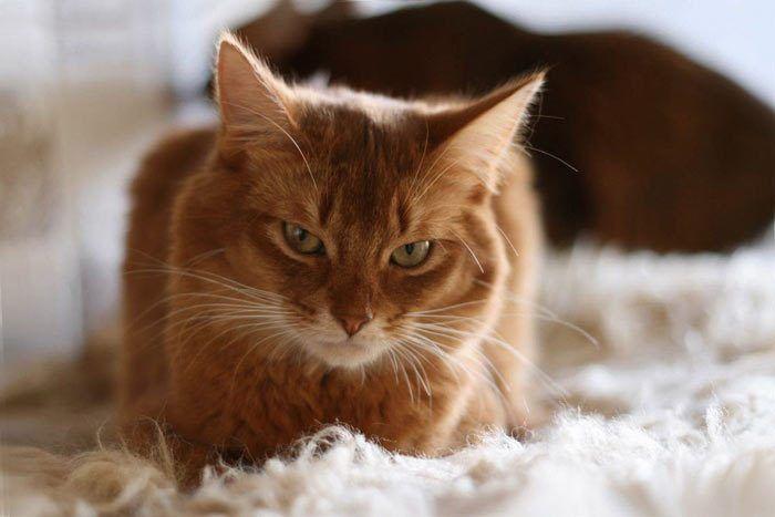 Полусонный кот