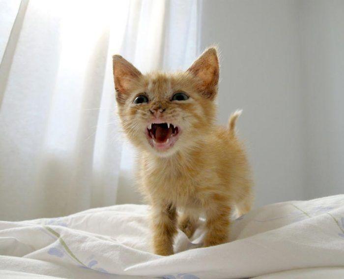 Котенок в стрессе