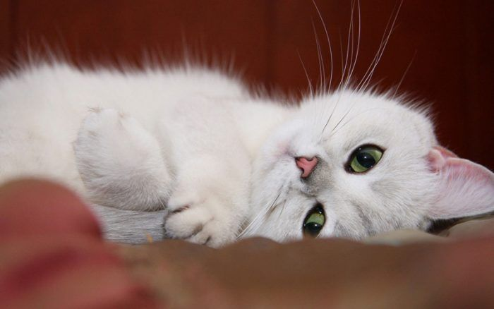 Зеленоглазый котенок