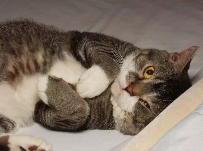 Толстенький котик