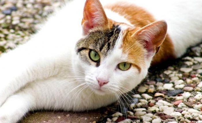 Кошка на земле