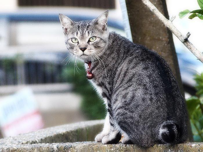 Пятнистая серая кошка