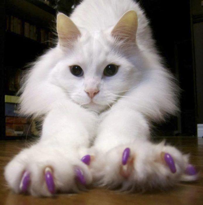 Белый кот с когтями