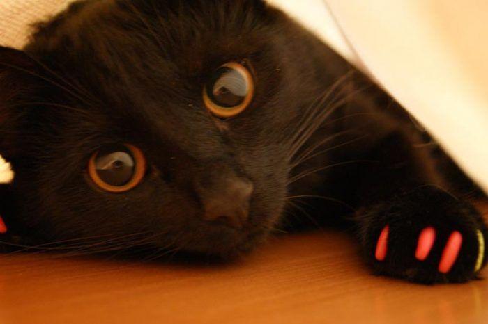Черный кот с когтями