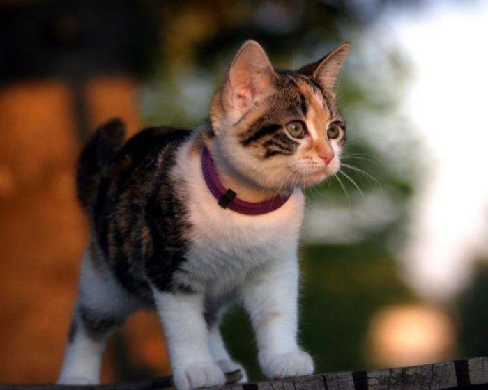 Котик в ошейнике