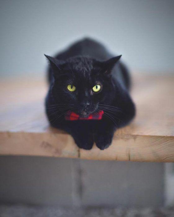 Черный кот в бантике