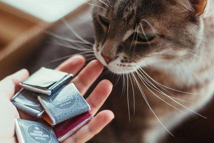 Шоколад для кошки