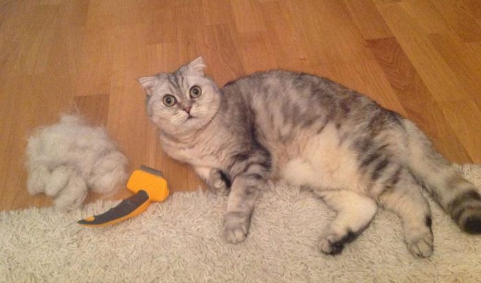 Кошечку вычесали фурминатором