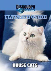 Идеальный путеводитель: Домашние кошки