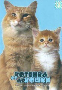 От котенка до кошки