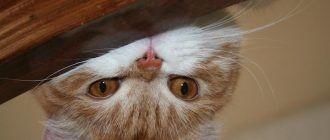 Котик что-то замышляет