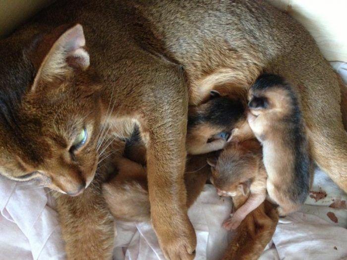 Кошка кормит детенышей