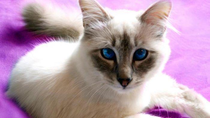 Еще одни голубые глаза