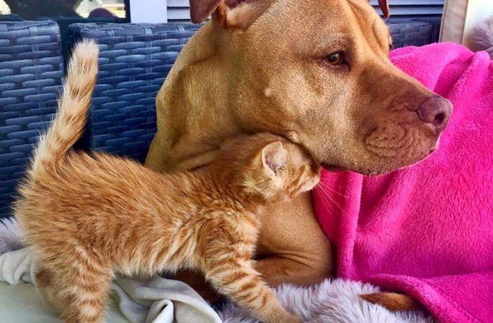 Можно ли кормить щенка кормом для кошек thumbnail