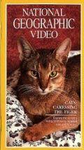 Кошки: Ласковые тигры