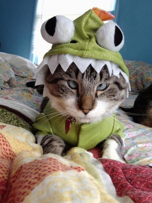 Кот-монстр
