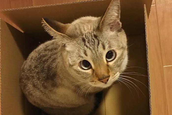 Полосатый косоглазый котяра