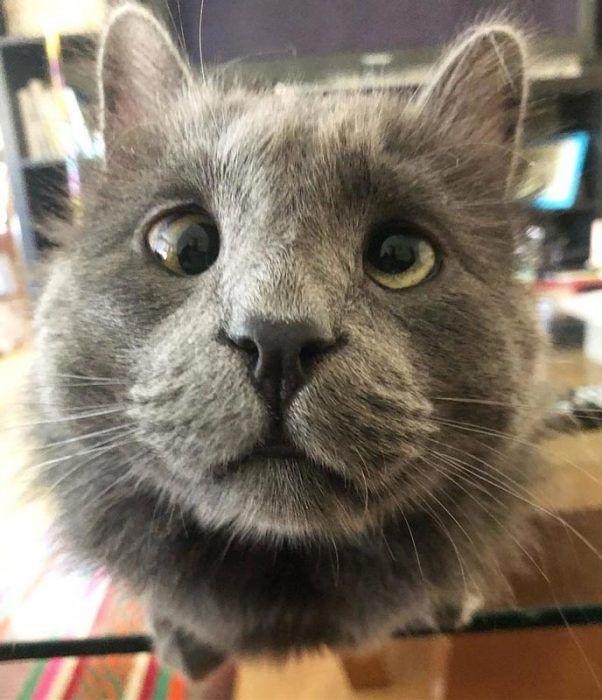 Кот смотрит в камеру