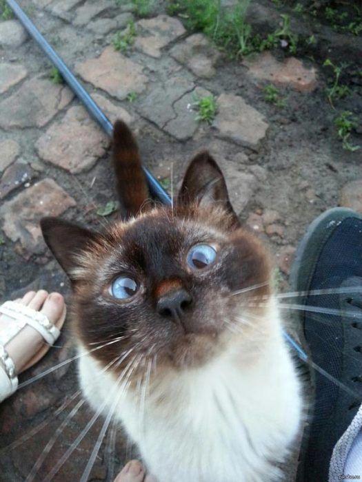 Кот просит еды