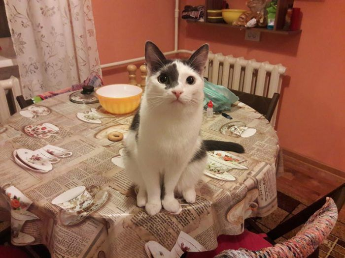 Кошка нагло сидит на столе