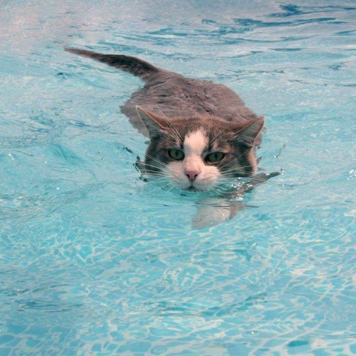 Кот в бассейне