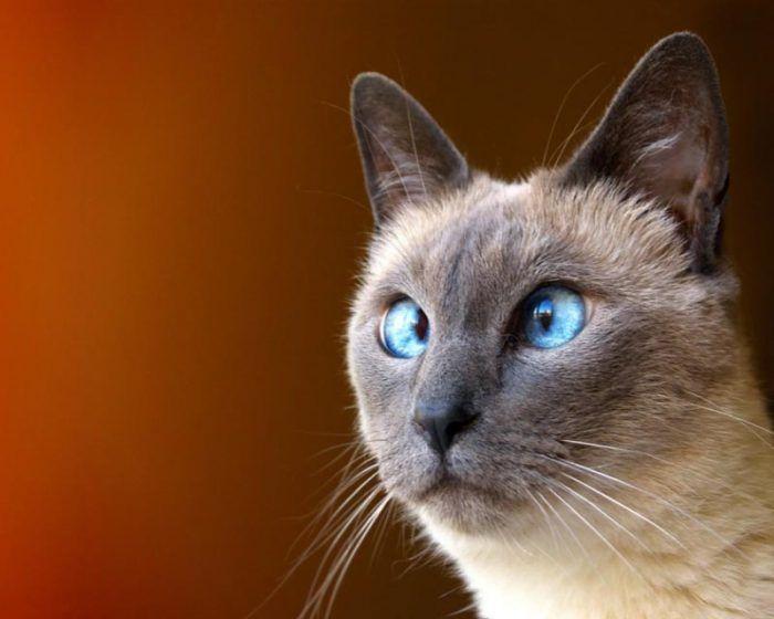 С голубыми глазками