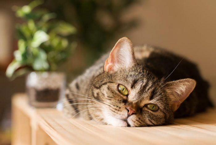 Кошка спит на столе