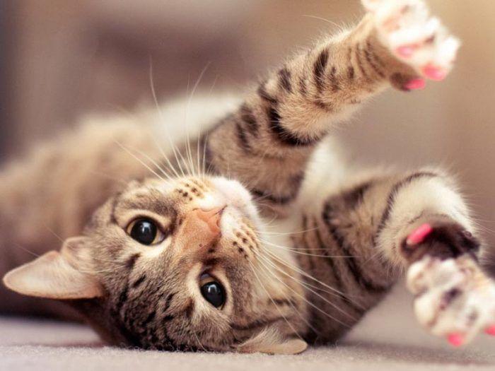 Котик с маникюром