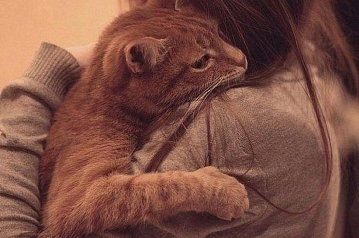Кошка умирает