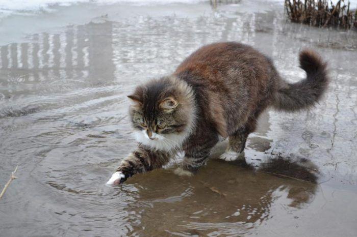 Кот ловит рыбку