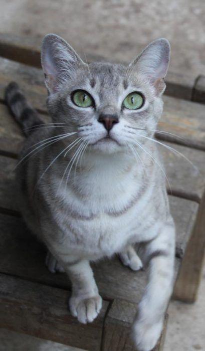 Симпатичный кот