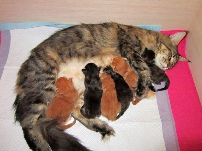 Кошка с котятами на лежанке