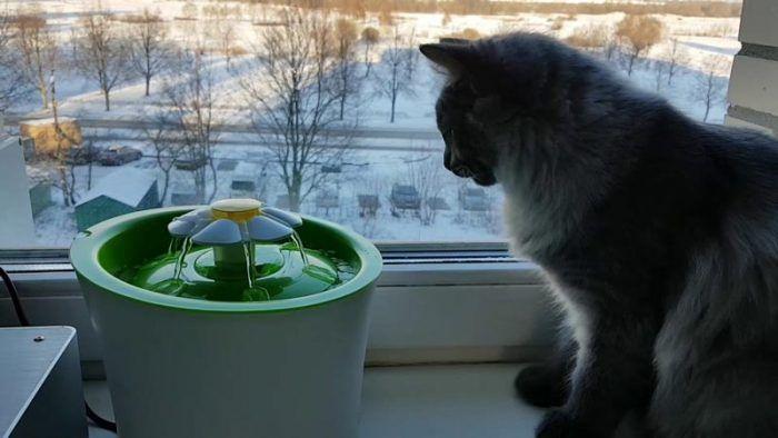 ᐉ Как выбрать поилку для кошки?