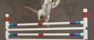 Кот перепрыгивает ограды