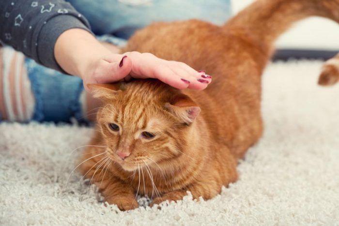 Гладят кота