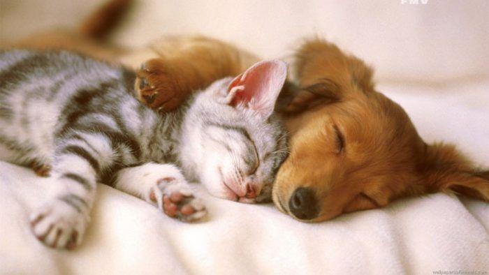 Спят сладко