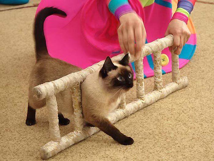 Кот прошел через лестницу