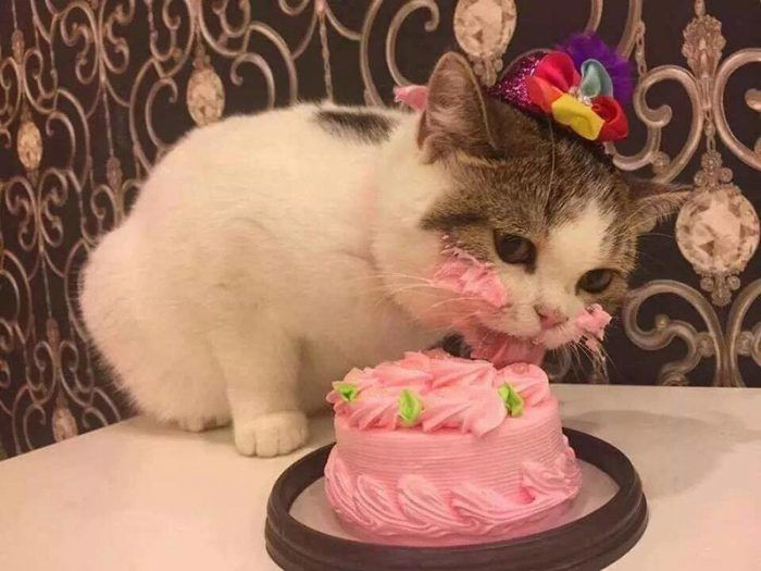 Кошка ест торт