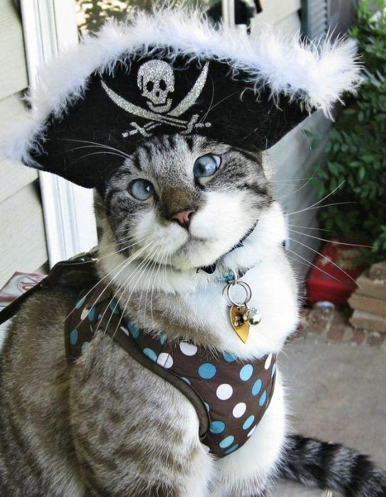 Кот-пират
