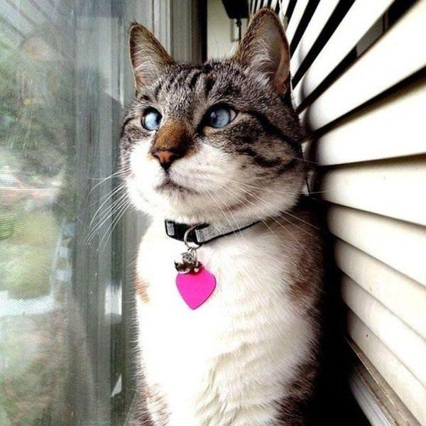 Смотрит в окно
