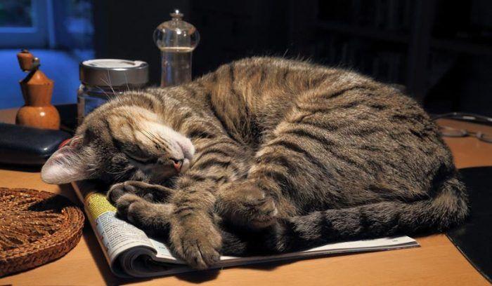 Кошка спит на бумагах