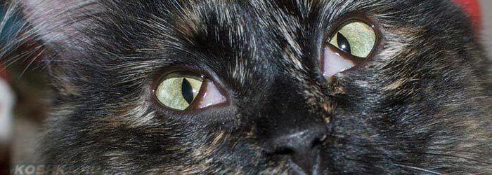 Зеленые глаза и третье веко