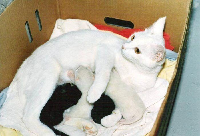 Белая кошка и её котята