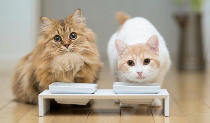 Котики ждут лакомства