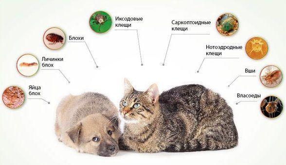 Что бывает у кошек