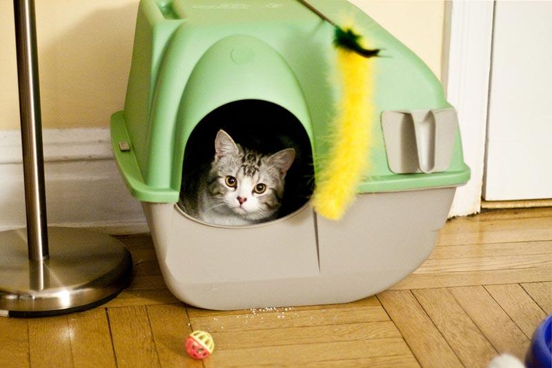 Лоток для кошки: виды кошачьих туалетов, как выбрать и использовать