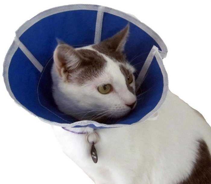 Кот в съемном воротнике