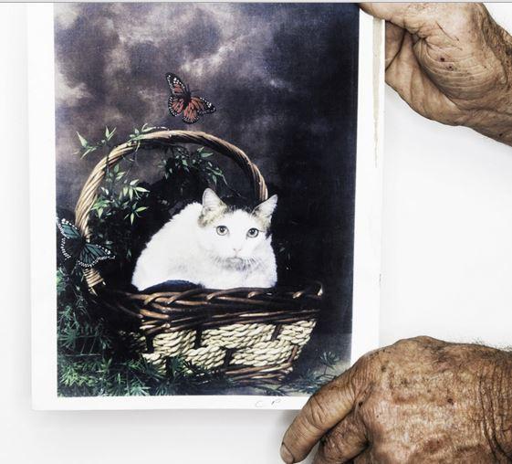 Кошка Крим Пафф